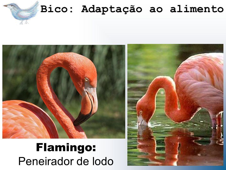Flamingo: Peneirador de lodo