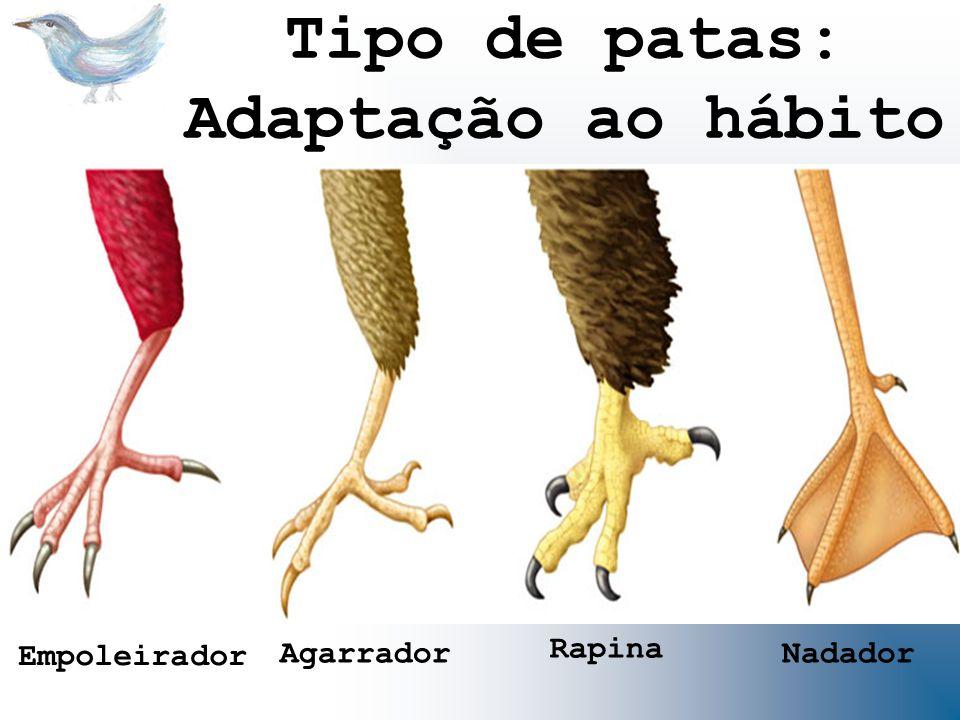 Tipo de patas: Adaptação ao hábito