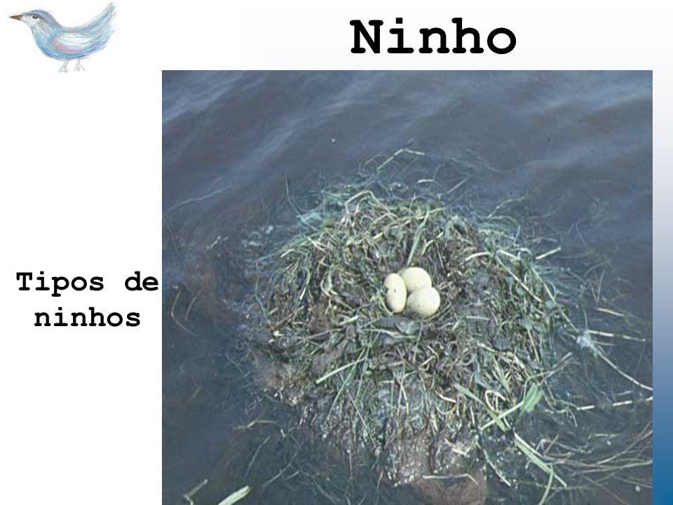 Ninho Tipos de ninhos.