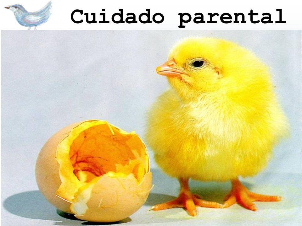 Cuidado parental