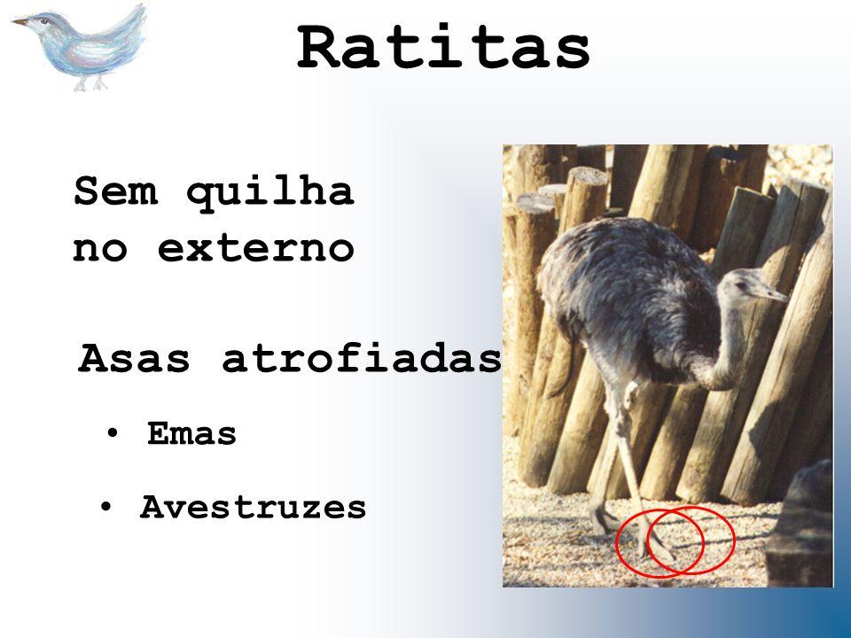 Ratitas Sem quilha no externo Asas atrofiadas Emas Avestruzes