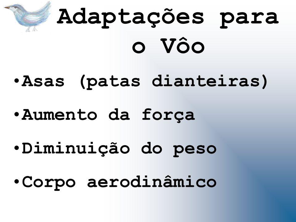 Adaptações para o Vôo Asas (patas dianteiras) Aumento da força