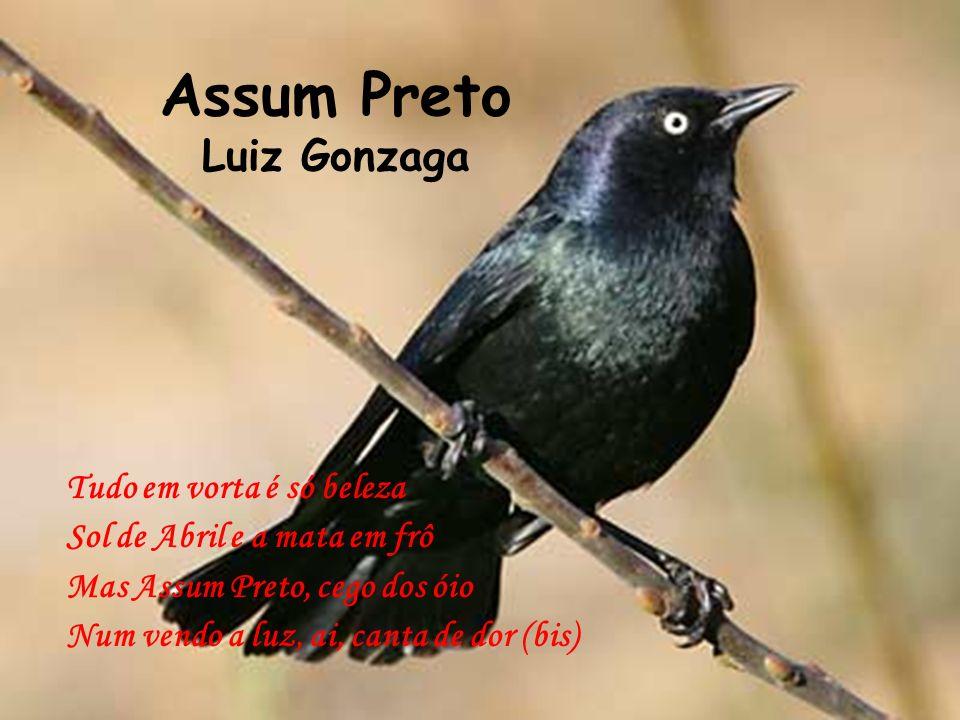 Assum Preto Luiz Gonzaga