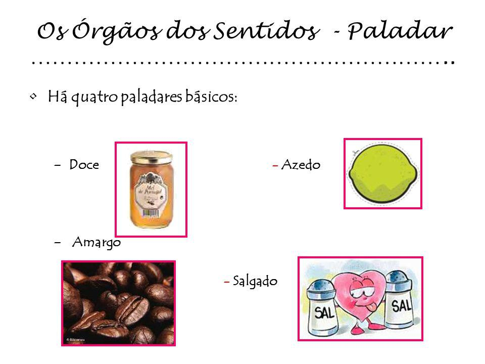 Os Órgãos dos Sentidos - Paladar …………………………………………………..