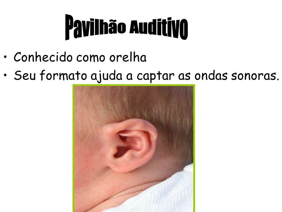 Pavilhão Auditivo Conhecido como orelha