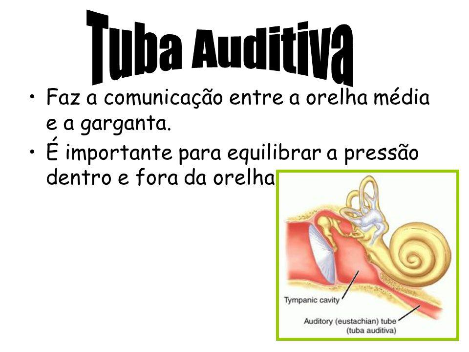 Tuba Auditiva Faz a comunicação entre a orelha média e a garganta.