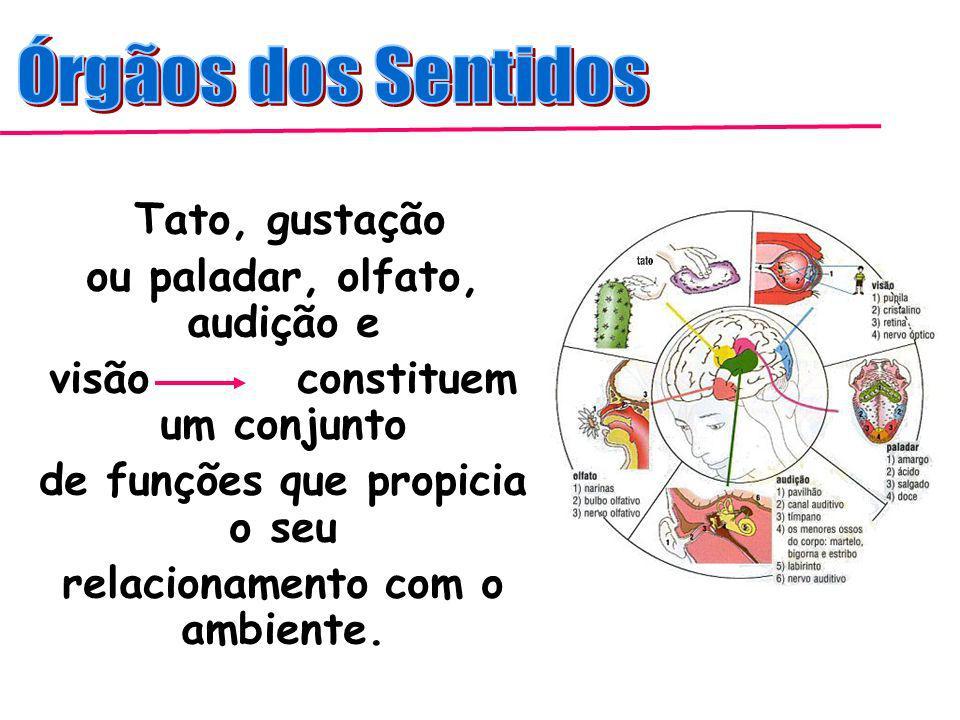 Órgãos dos Sentidos Tato, gustação ou paladar, olfato, audição e