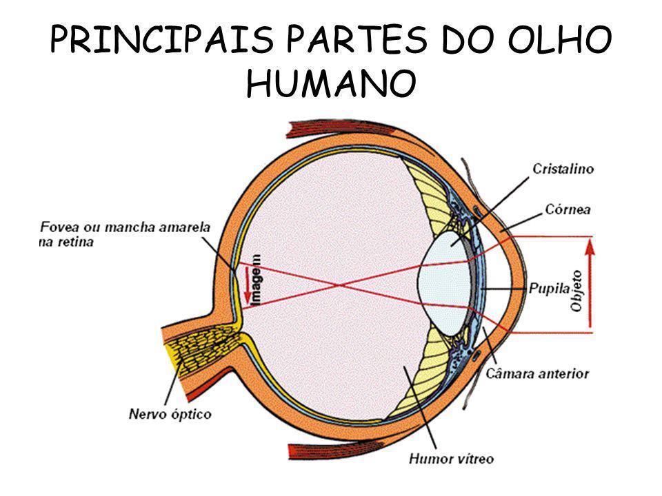 PRINCIPAIS PARTES DO OLHO HUMANO