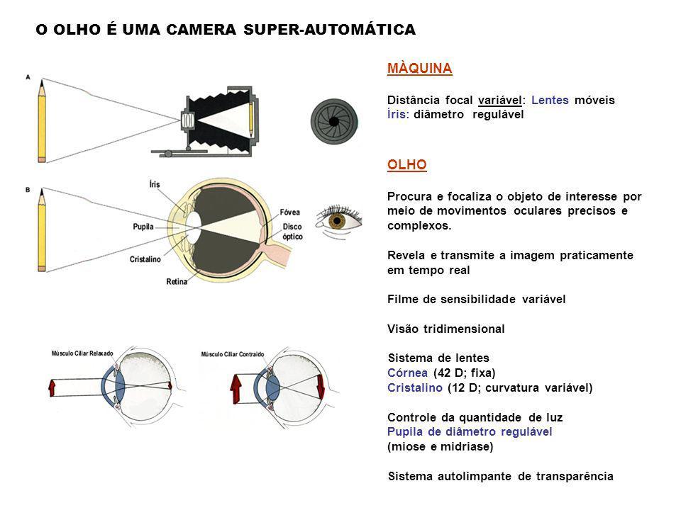 O OLHO É UMA CAMERA SUPER-AUTOMÁTICA
