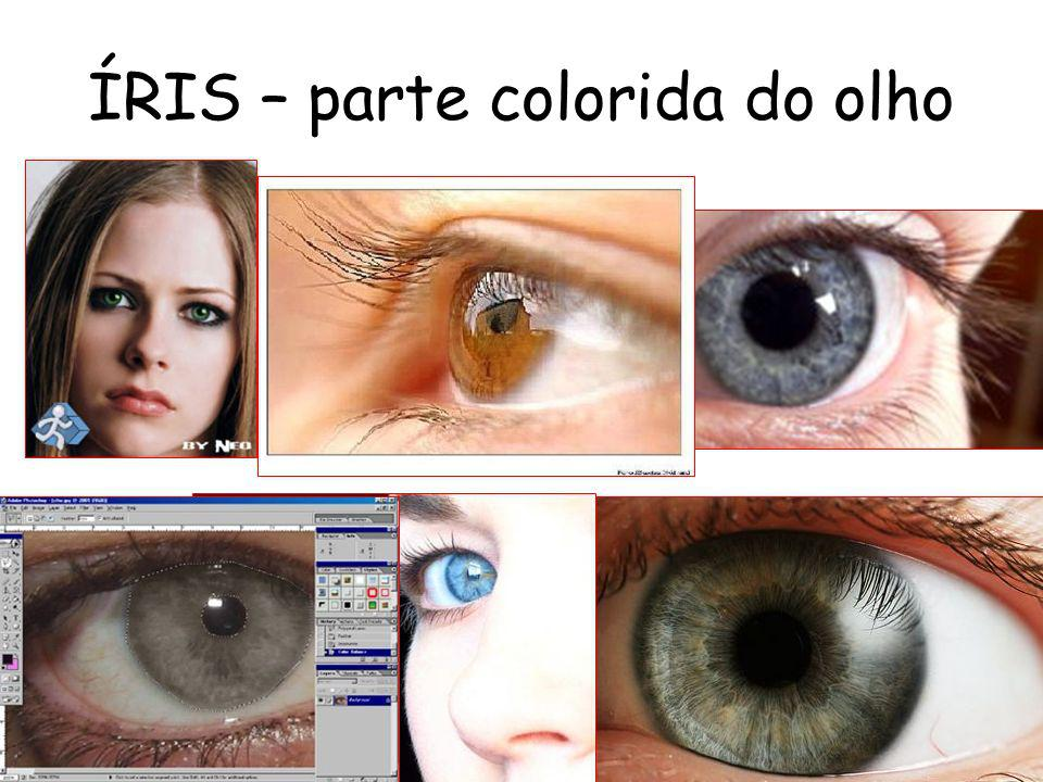 ÍRIS – parte colorida do olho