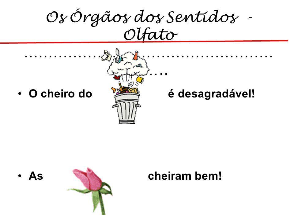Os Órgãos dos Sentidos - Olfato …………………………………………………..