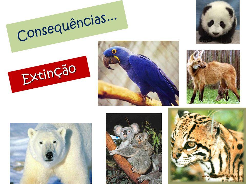 Consequências... Extinção