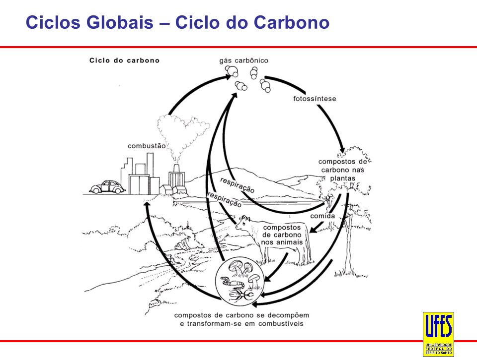 Ciclos Globais – Ciclo do Carbono