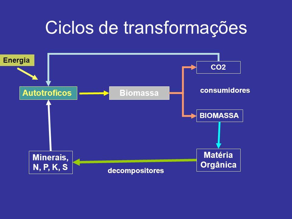 Ciclos de transformações