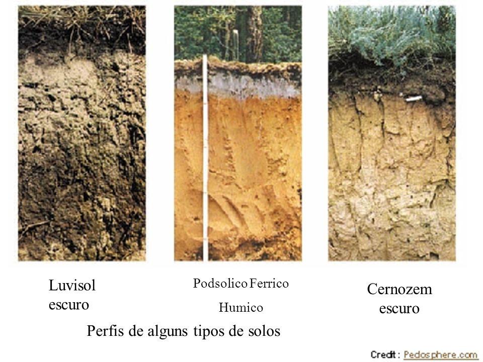 Perfis de alguns tipos de solos
