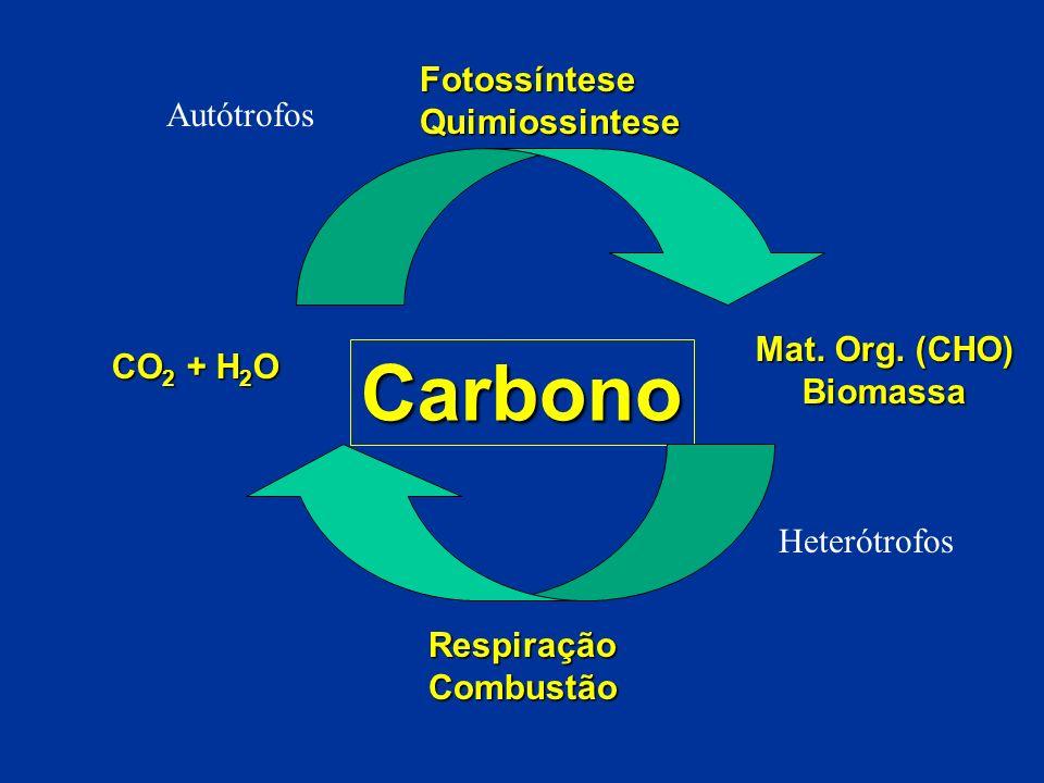 Carbono Fotossíntese Quimiossintese Autótrofos Mat. Org. (CHO)