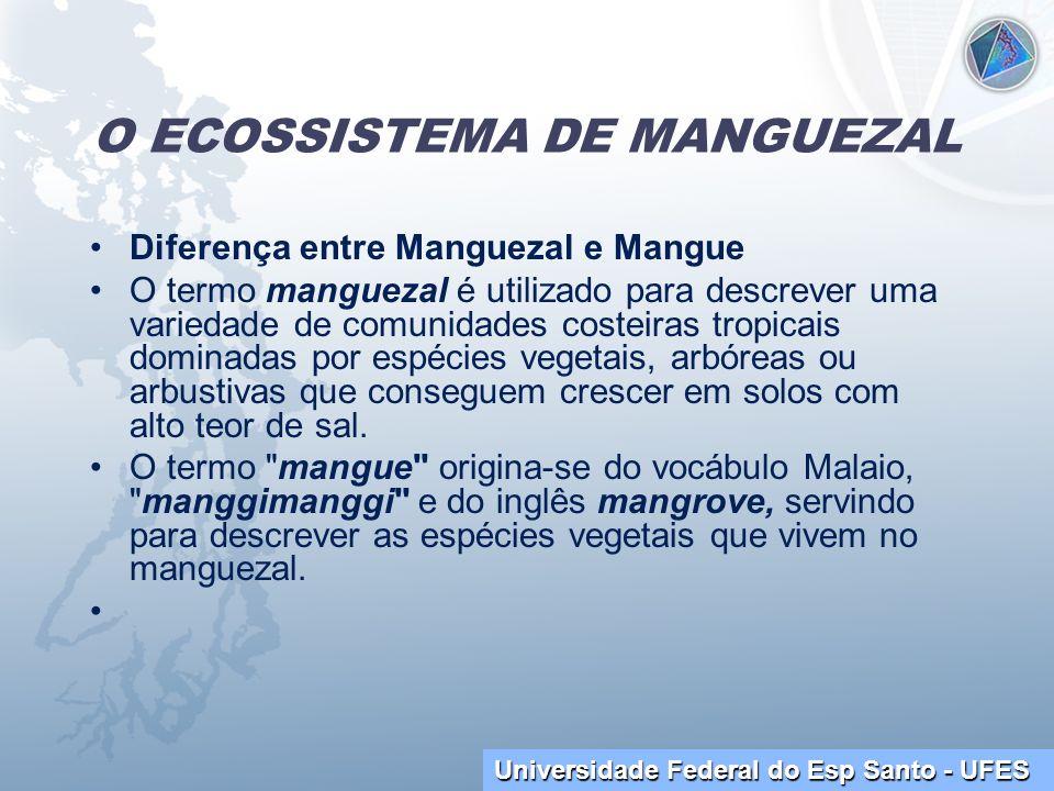 O ECOSSISTEMA DE MANGUEZAL