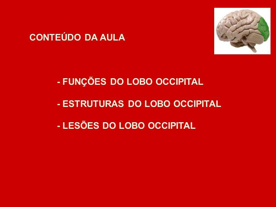 CONTEÚDO DA AULA - FUNÇÕES DO LOBO OCCIPITAL. - ESTRUTURAS DO LOBO OCCIPITAL.