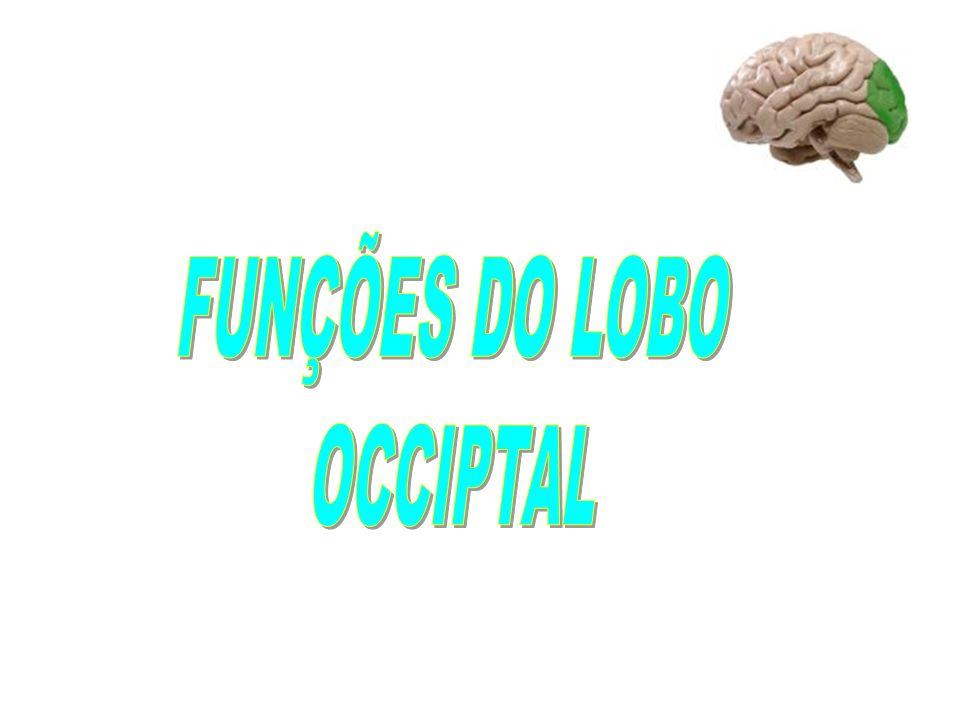 FUNÇÕES DO LOBO OCCIPTAL