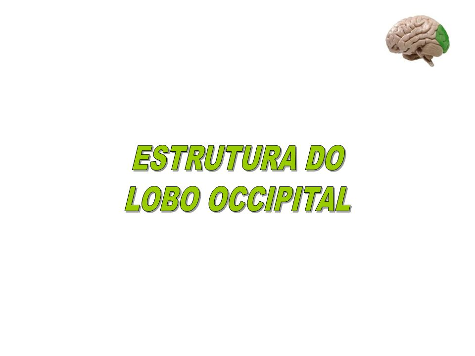 ESTRUTURA DO LOBO OCCIPITAL