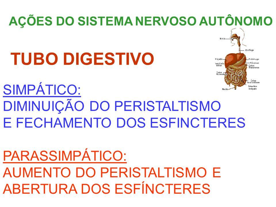TUBO DIGESTIVO SIMPÁTICO: DIMINUIÇÃO DO PERISTALTISMO