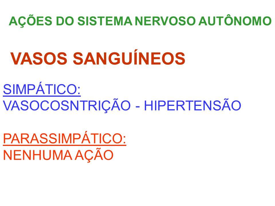 VASOS SANGUÍNEOS SIMPÁTICO: VASOCOSNTRIÇÃO - HIPERTENSÃO