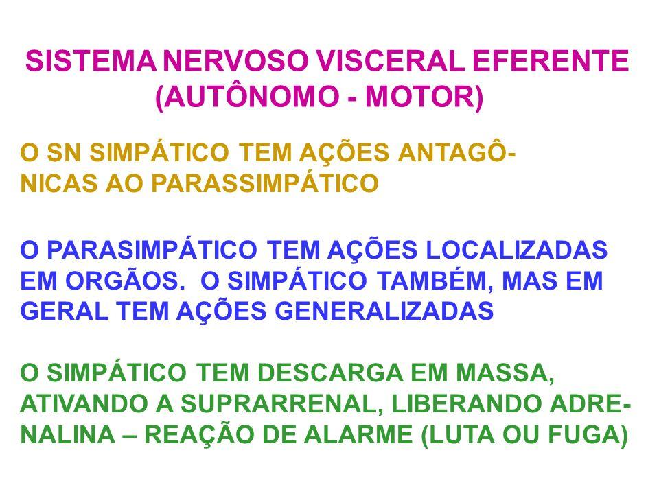 SISTEMA NERVOSO VISCERAL EFERENTE (AUTÔNOMO - MOTOR)