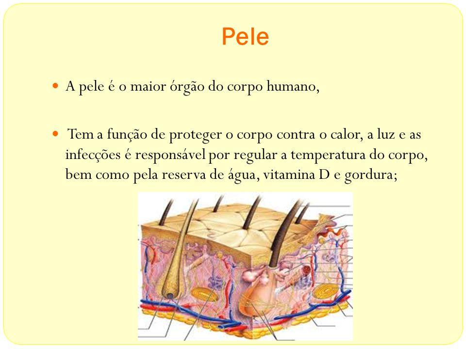Pele A pele é o maior órgão do corpo humano,
