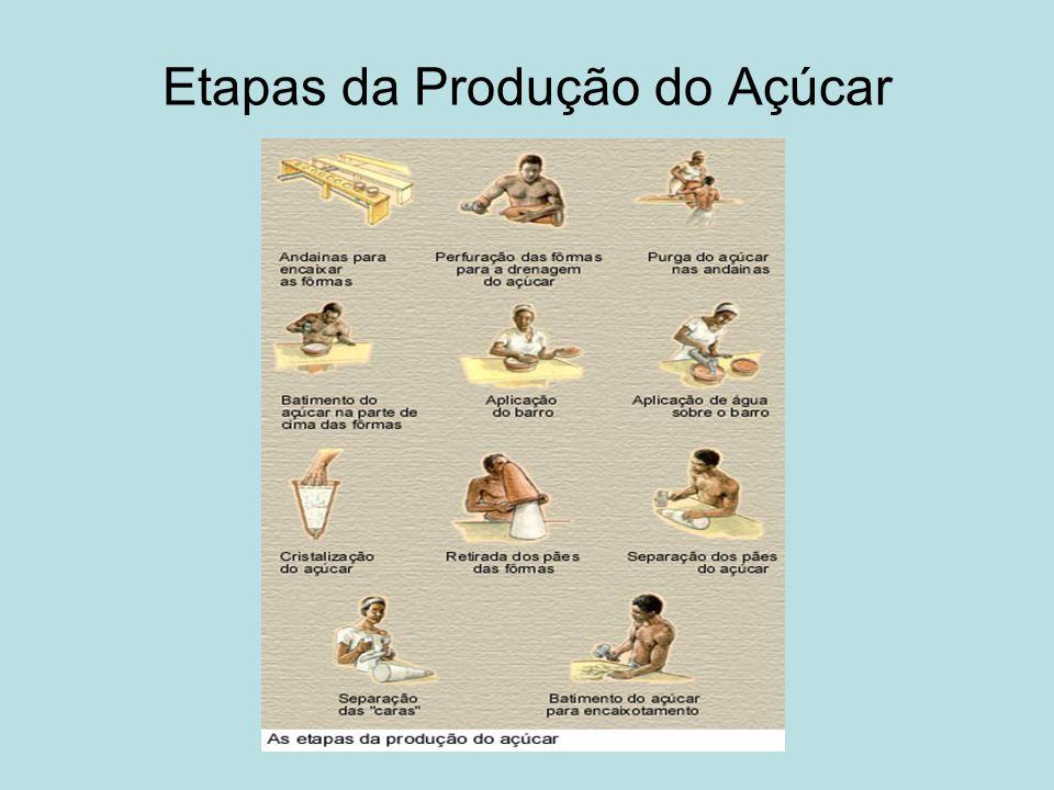 Etapas da Produção do Açúcar