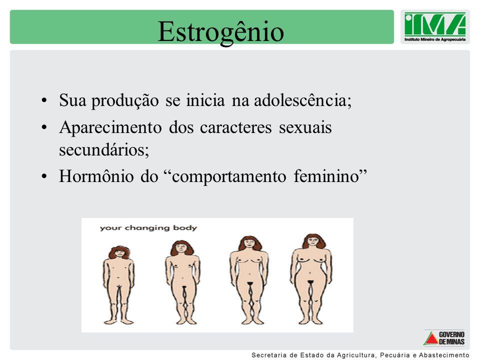 Estrogênio Sua produção se inicia na adolescência;
