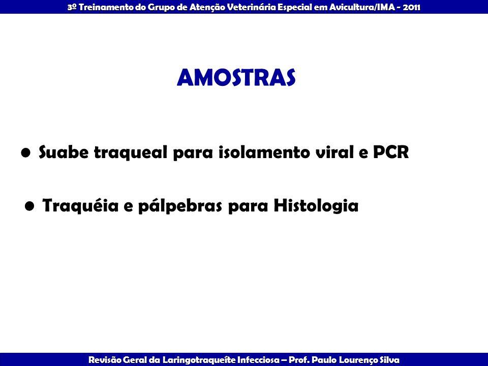 AMOSTRAS Suabe traqueal para isolamento viral e PCR