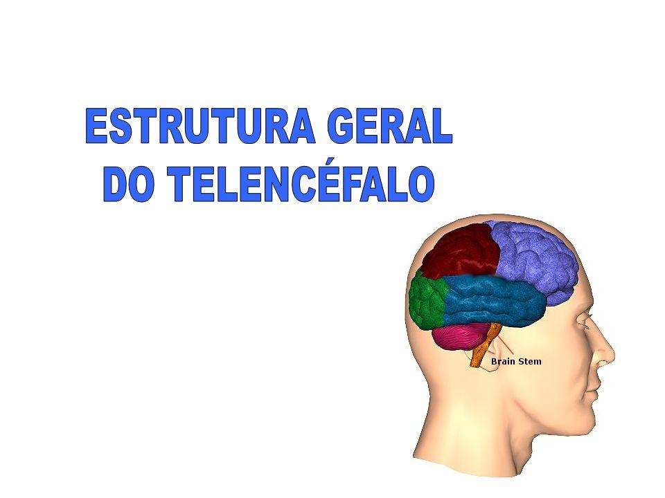 ESTRUTURA GERAL DO TELENCÉFALO