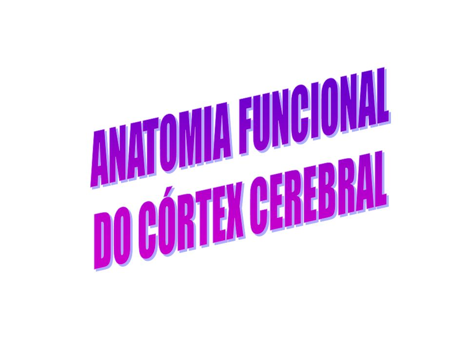 ANATOMIA FUNCIONAL DO CÓRTEX CEREBRAL