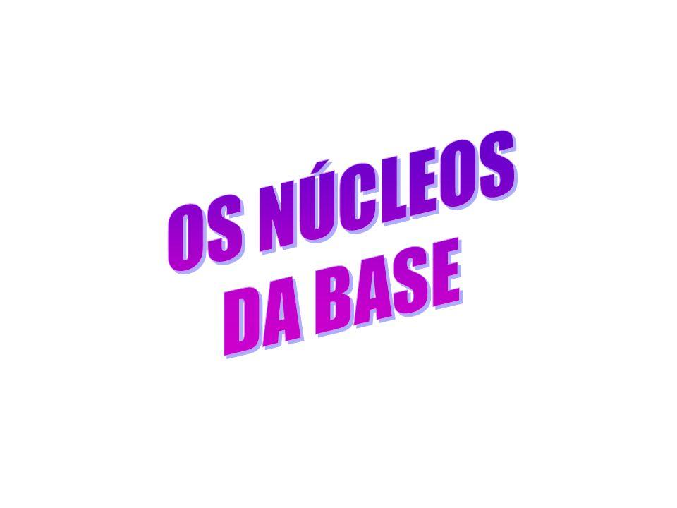 OS NÚCLEOS DA BASE