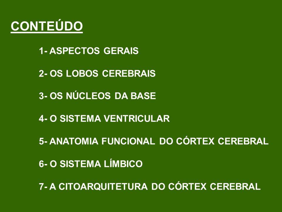 CONTEÚDO 1- ASPECTOS GERAIS 2- OS LOBOS CEREBRAIS