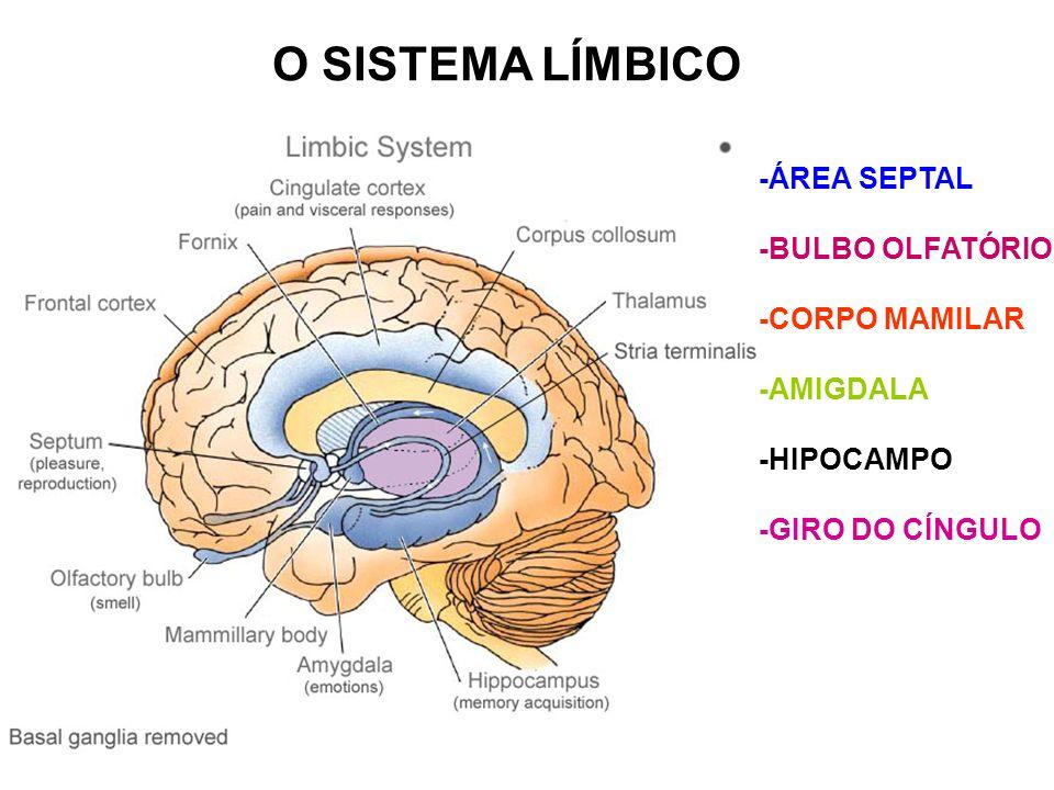 O SISTEMA LÍMBICO -ÁREA SEPTAL -BULBO OLFATÓRIO -CORPO MAMILAR