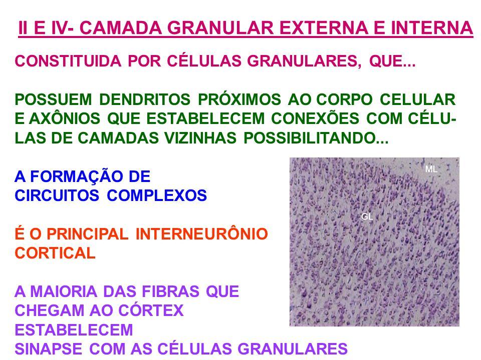 II E IV- CAMADA GRANULAR EXTERNA E INTERNA
