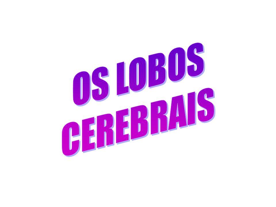 OS LOBOS CEREBRAIS