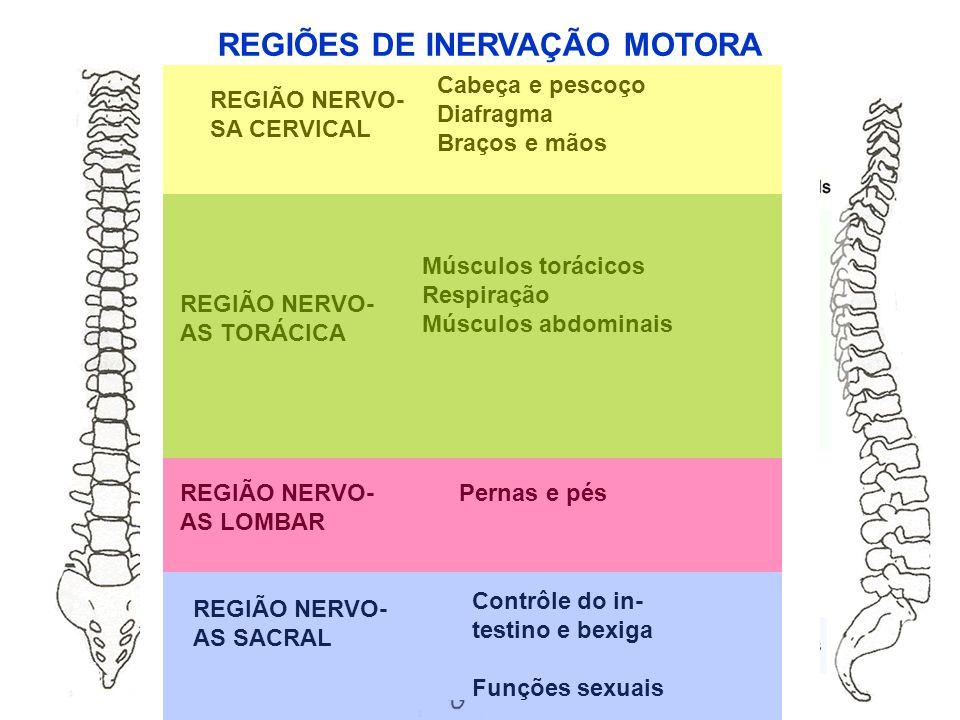 REGIÕES DE INERVAÇÃO MOTORA