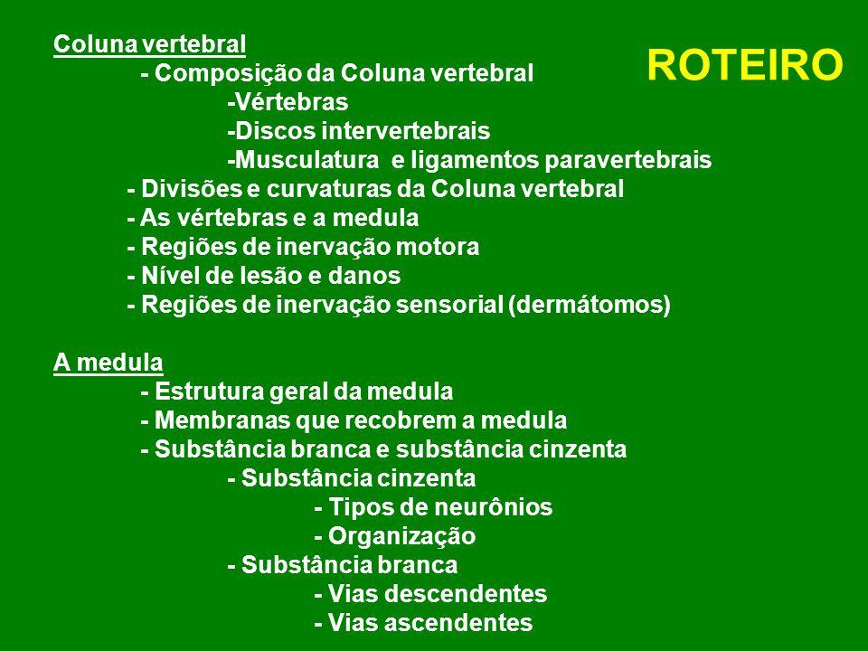 ROTEIRO Coluna vertebral - Composição da Coluna vertebral -Vértebras