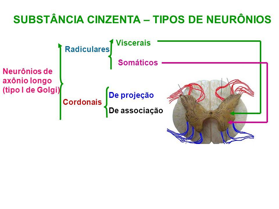 SUBSTÂNCIA CINZENTA – TIPOS DE NEURÔNIOS