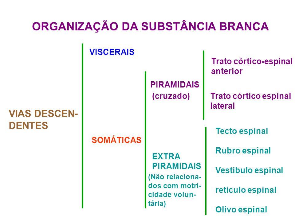 ORGANIZAÇÃO DA SUBSTÂNCIA BRANCA