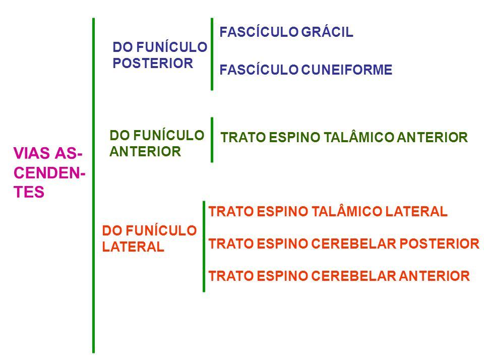 VIAS AS- CENDEN- TES FASCÍCULO GRÁCIL DO FUNÍCULO POSTERIOR