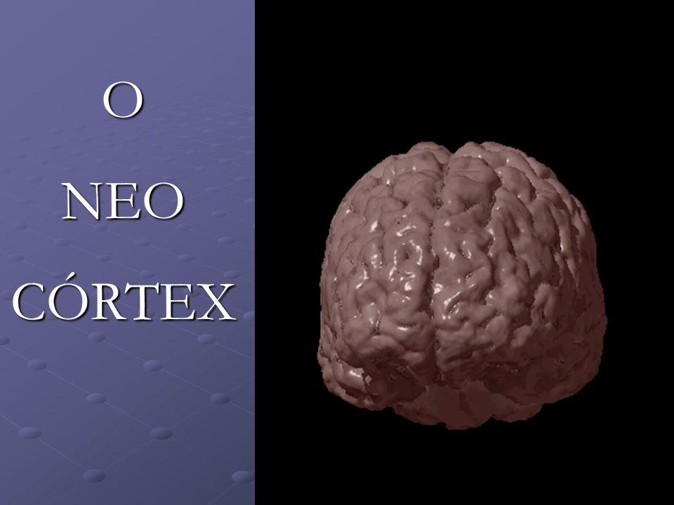 O NEO CÓRTEX