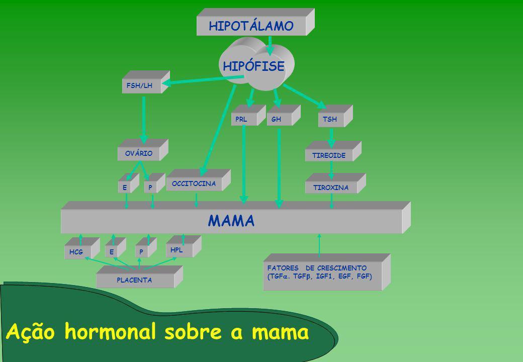 Ação hormonal sobre a mama