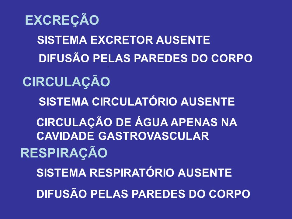 EXCREÇÃO CIRCULAÇÃO RESPIRAÇÃO SISTEMA EXCRETOR AUSENTE