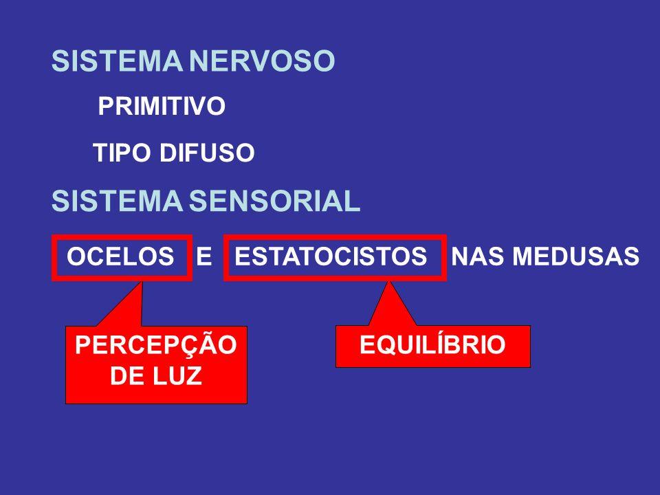 SISTEMA NERVOSO SISTEMA SENSORIAL PRIMITIVO TIPO DIFUSO