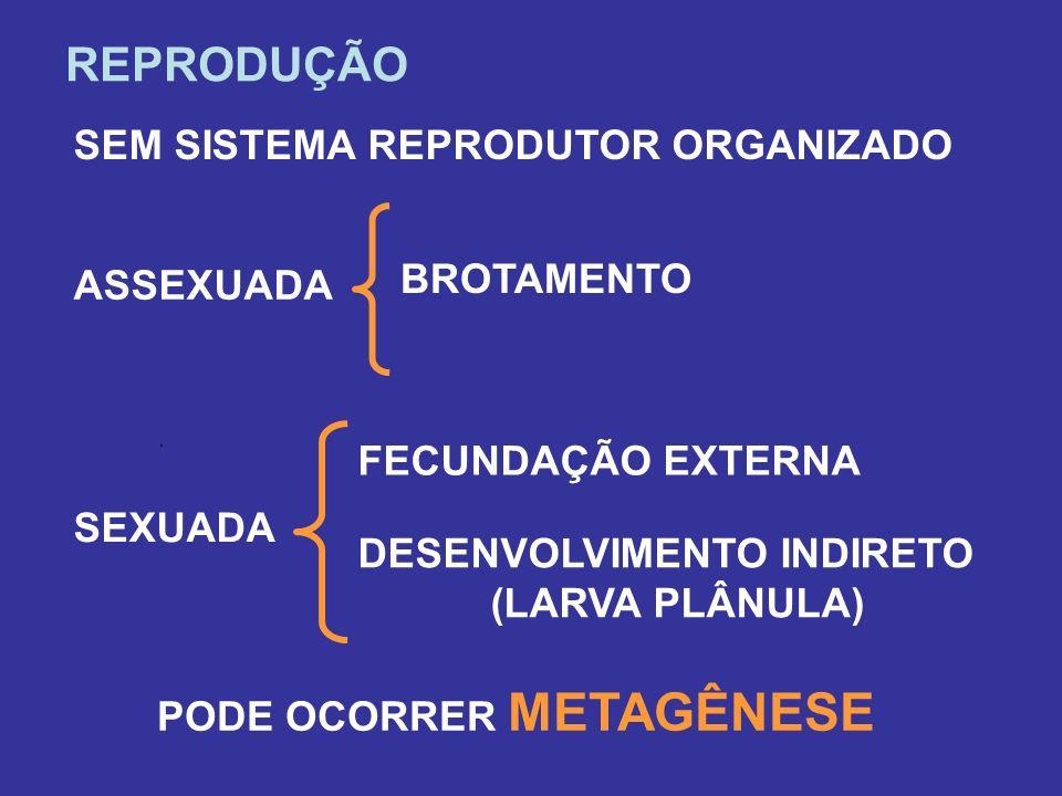 REPRODUÇÃO SEM SISTEMA REPRODUTOR ORGANIZADO BROTAMENTO ASSEXUADA