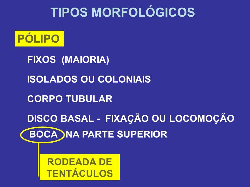 TIPOS MORFOLÓGICOS PÓLIPO FIXOS (MAIORIA) ISOLADOS OU COLONIAIS