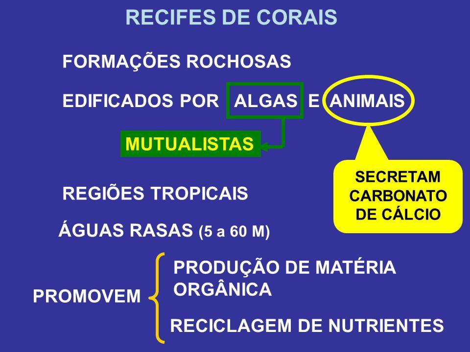 SECRETAM CARBONATO DE CÁLCIO